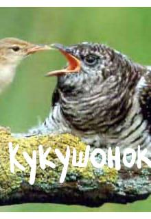 обложка книги Кукушонок.
